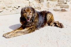 watchdog Image stock