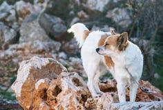 watchdog Immagini Stock