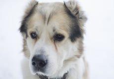 watchdog Fotografie Stock Libere da Diritti