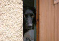 watchdog Imagen de archivo libre de regalías