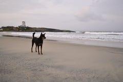 watchdog imagen de archivo