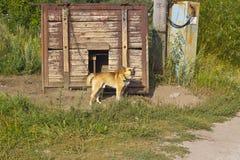 Watchdog Royalty Free Stock Image