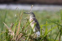 Watchful bird Royalty Free Stock Photo