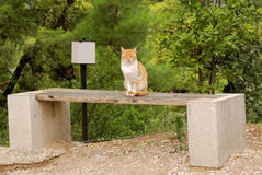 Watchful cat in Epidavros, Greece Royalty Free Stock Image