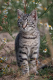 Watchful cat Royalty Free Stock Photos