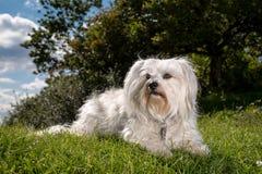 Watchful Dog Stock Photos