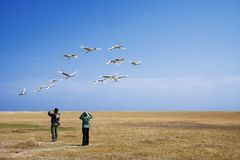 Watching bird migration Stock Image