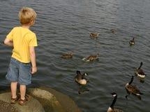 Watching The Birds stock photos