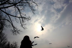 Watching birds. Woman is watching seagulls in the sky Stock Photography
