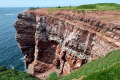 Watching Breeding Birds in the Cliffs of Helgoland Stock Images