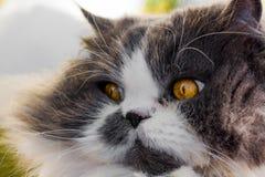 Watching Cat Stock Photo