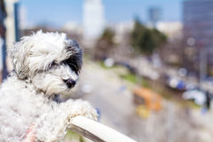 Watching dog from top of balcony. Stock Photos