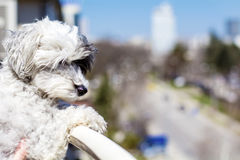 Watching dog from top of balcony. Stock Images