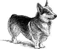 Watching dog Stock Image