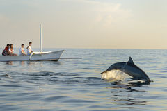 Watching dolphins Royalty Free Stock Images