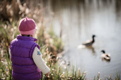 Watching ducks Royalty Free Stock Photography
