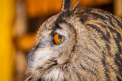Watching eagle owl in a sample of birds of prey, medieval fair Royalty Free Stock Photos