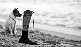 Watching!. Everyday this dog stands on the beach to watch his boss swiming and the bosss artificial leg. All of his life finally, he gets a good friend Stock Photo