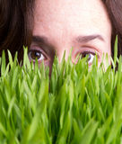 Watching Grass Grow Stock Image