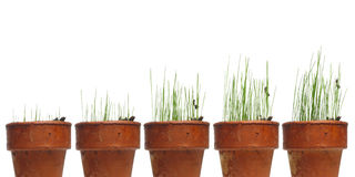 Free Watching Grass Grow Royalty Free Stock Images - 3418659