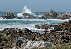 Watching the huge waves, Monterey Bay Stock Photography