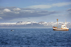 Watching humpback whale. Whales are observed from a boat off the coast of Iceland Royalty Free Stock Photography