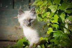 Watching kitten Stock Photo