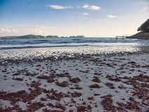 Watching the malgrats islands with some seaweed on the sand royalty free stock photography