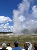 Watching Old Faithful. People watching Old Faithful errupt Stock Images