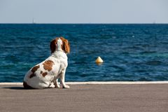 Watching the sea Royalty Free Stock Photos