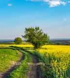 Country road to rapeseed field royalty free stock image