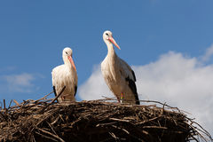 Watching storks on nest Royalty Free Stock Photos