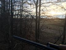 Watching the Sunrise from a Treestand Royalty Free Stock Photo