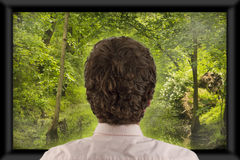 Watching Television. Back of man's head as he's watching flat screen television stock photo