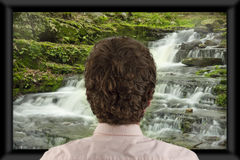 Watching Television. Back of man's head as he's watching flat screen television stock images