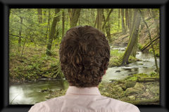 Watching Television. Back of man's head as he's watching flat screen television royalty free stock photos