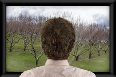 Watching Television. Back of man's head as he's watching flat screen television stock photos