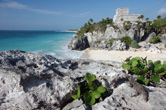 Watching Tulum ruins with a lizard Royalty Free Stock Photos