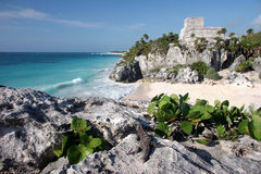 Watching Tulum ruins with a lizard. Watching the sandy beach and Tulum ruins with a lizard. Tulum. Yucatan. Mexico stock images