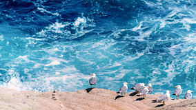 Watching the waves Royalty Free Stock Photos
