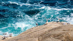 Watching the waves Royalty Free Stock Images