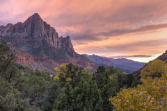 Watchman Autumn Pink Sunset. Sunset on the Watchman mountain with a yellow Autumn Cottonwood tree in the foreground in Zion National Park, Utah Stock Photography
