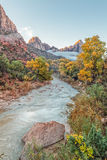 The Watchman and River  in Fall. The virgin river flowing towards the watchman in zion national park utah in fall Stock Photo