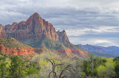 The Watchman Zion National Park. Spring landscape of the Watchman with clearing storm, Zion National Park, Utah, USA Royalty Free Stock Image
