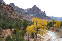 The Watchman in Zion NP. View of the sandstone mountain known as the Watchman in Zion National park with autumn colors and the virgin river Royalty Free Stock Photography