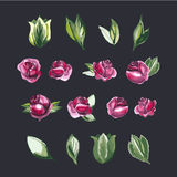 Watecolor Floral Set of Design Elements, Including Royalty Free Stock Photos