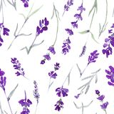 Watecolor lavender delicate seamless pattern on white background vector illustration