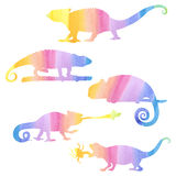 Watecolor set of chameleons. Royalty Free Stock Image