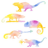 Watecolor set of chameleons. Royalty Free Stock Photo