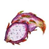 Watecolor smoka owoc na białym tle ilustracji